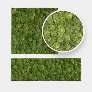 Moss_Design_Man