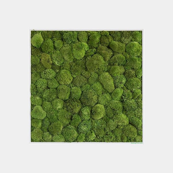 moss_wall_square_design